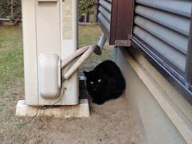 黒猫スタンバイ中