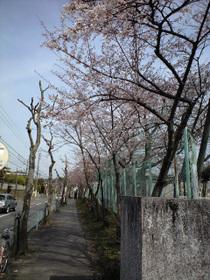 Sakura_0904005