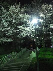 Sakura_100406_4