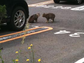 Catsfignt_1_100522