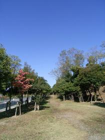 Aki2_051112