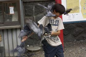 鳩に襲われる少年
