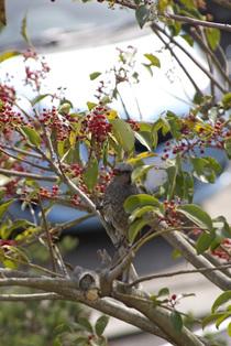 Bird2_060406