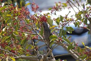 Bird_060406