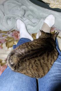 Cat1_060414
