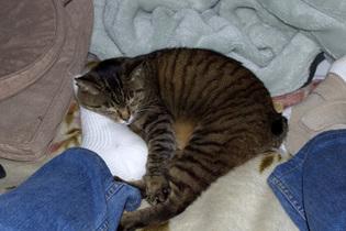 Cat2_060414