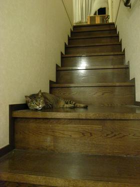 階段でだらけ猫