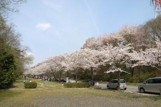 潮見坂平和公園の桜並木