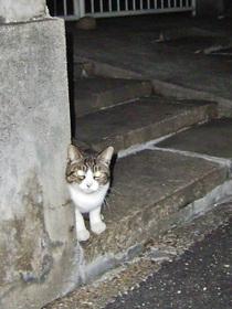 集会参加猫の一匹