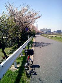 Yadagawa_040410_1.jpg