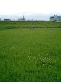 Yadagawa_040515.jpg